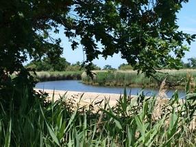 le-teich-bassin-arcachon-tourisme-le-sentier-du-littoral